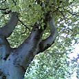 Tue 06/13/2006 13:23 Iveagh Gardens