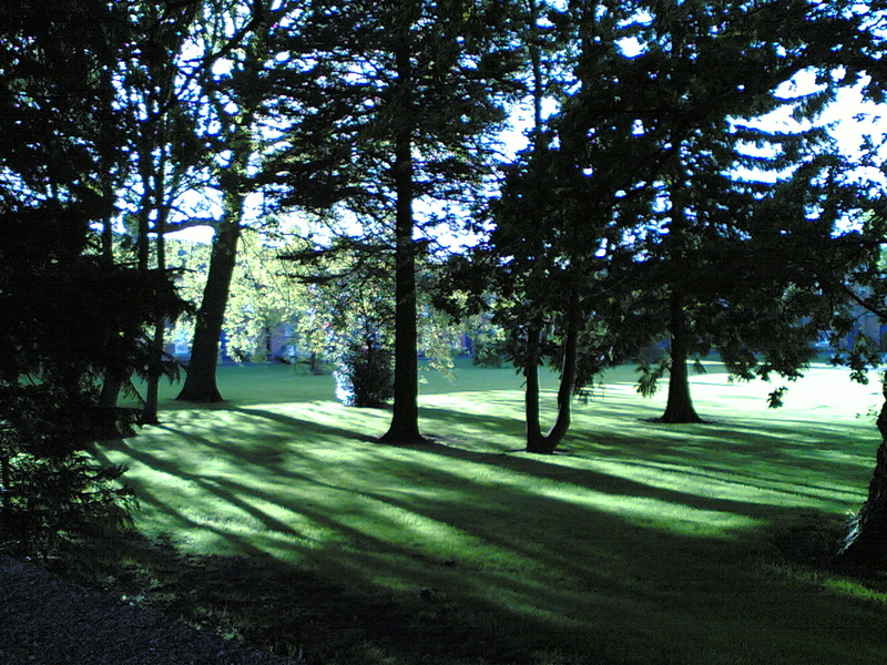 Light on a Lawn